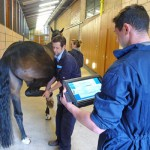 Flexion testing using the sensor-based system at the University of Glasgow's School of Veterinary Medicine.